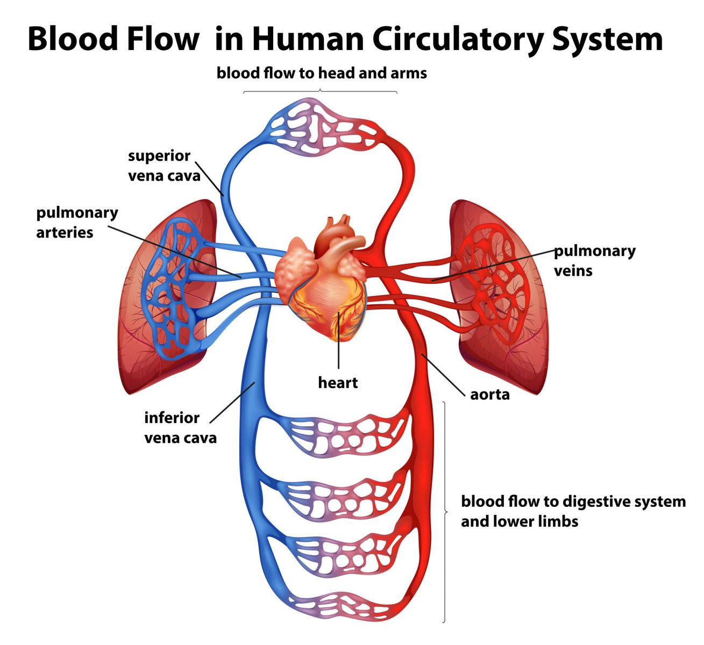 Narrow Blocked Artery Surgery Treatment Singapore |Safe Fast